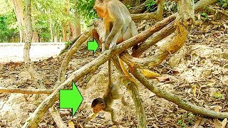 MG, Very Very Bad Duchese Dragging Her Baby Duke Tail Up On Tree|#Monkey Nightmare