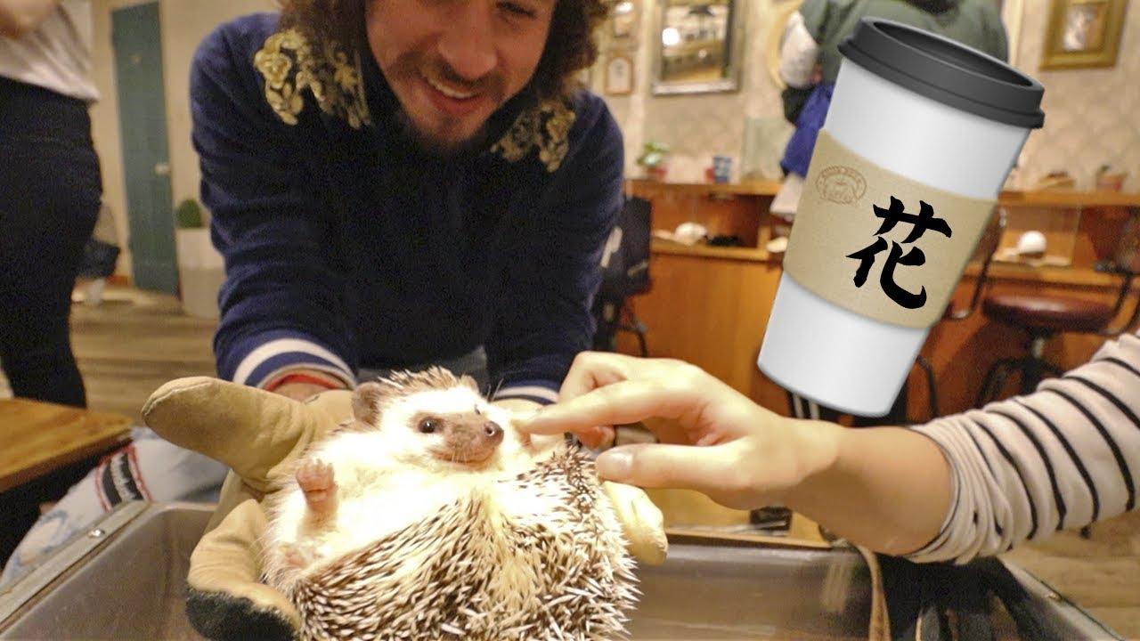 Visitando cafeterías de animales en Japón