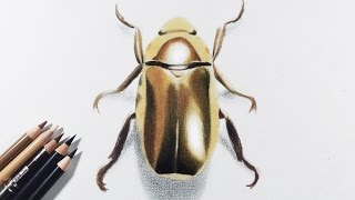 How to draw gold / metallic object with colored pencils -- A golden beetle.