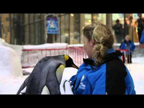 Video: Antarctic penguins arrive at Ski Dubai