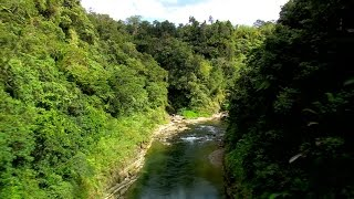 FIJI Water and Conservation International team up to protect Fiji's rainforest