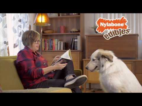 """""""quality-time""""-by-nylabone®-healthy-edibles®-chew-treats-for-dogs"""