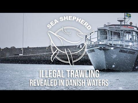 Sea Shepherd Reveals Illegal Trawling in Danish Waters