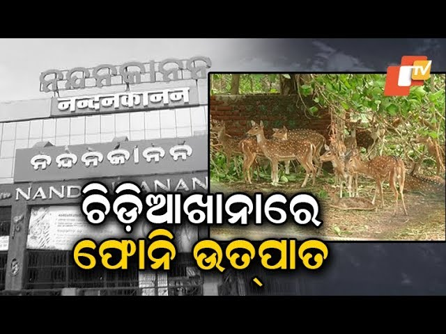 Cyclone Fani causes extensive damage to Nandankanan Zoological Park