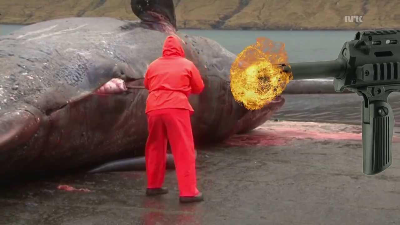 Sperm whale explode
