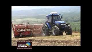 SIEMBRA Y COSECHA TV: Manejo del cultivo de chia.