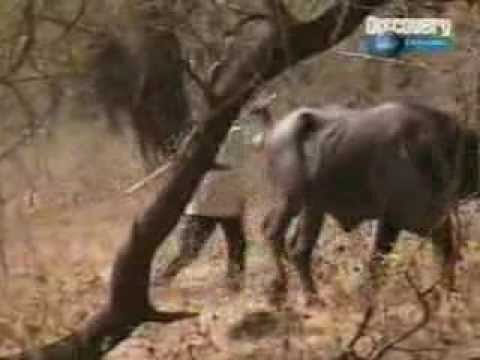 Gir National Park India - Discovery Channel -