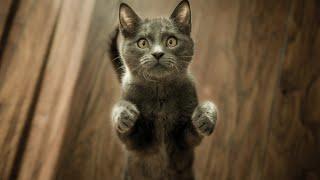 L'intelligence animale, y croyez-vous ? sur btlv.fr