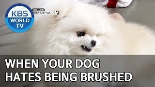 When your dog hates being brushed [Dogs are incredible/ENG/2020.01.21]