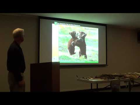 Black Bear Happenings in NH - Part 2