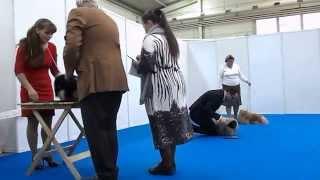 Интернациональная выставка собак всех пород CACIB-FCI