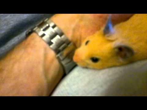 Super-chilled hamster!