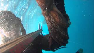 Octapus & skipjack tuna 4kgr