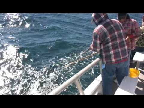 All Day Fishing On The Gulf Queen (Queen Fleet)