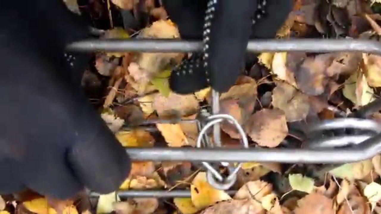 2 фев 2017. Импровизированный день сурка организовали пермяки из приюта для мелких животных «чип и дейл». В этом году в день сурка,