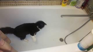 Обзор силикагелевого кошачьего наполнителя для туалета