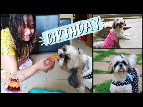 Flurry's Birthday Celebration Vlog ???? ???? | Shih Tzu's BIRTHDAY | Dog Friendly Birthday Cake Reci