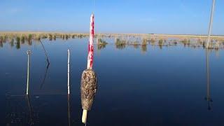 В Мёртвом БОЛОТЕ Карась ПРЁТ на ПОПЛАВОК Рыбалка 2021 Ловля на удочку в удовольствие Сезон открыт