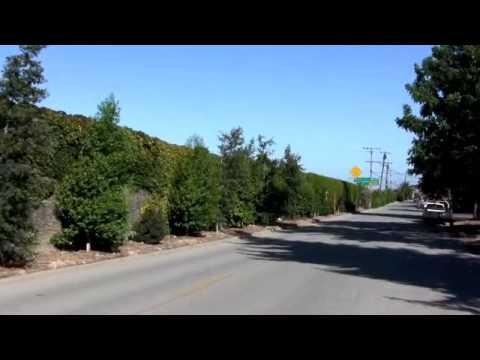 Unofficial East Palo Alto Tree Initiative Trailer