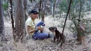 Repeat youtube video Thirsty Koala