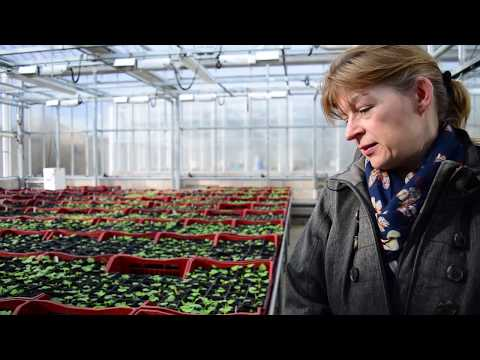 James Hutton Limited, The Raspberry Diaries, Ep 1