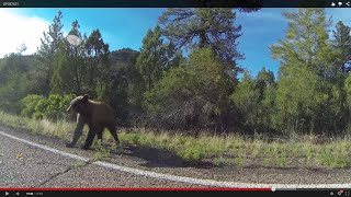 Bear to the Left, U.S. 60 East to Indian Route 12 toward Cibecue, AZ, 19 June 2015, GP087631