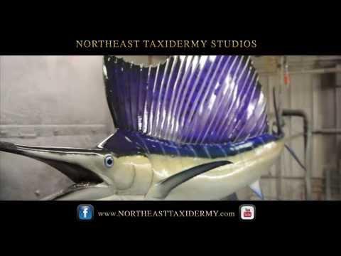 Northeast Taxidermy Studios - Sailfish Mounts