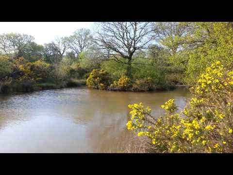 Dilhorne Pools (Finney's Pools) 8.5.16