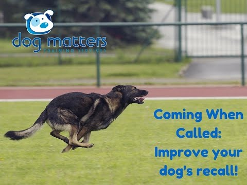 Coming When Called: How to Improve Your Dog's Recall