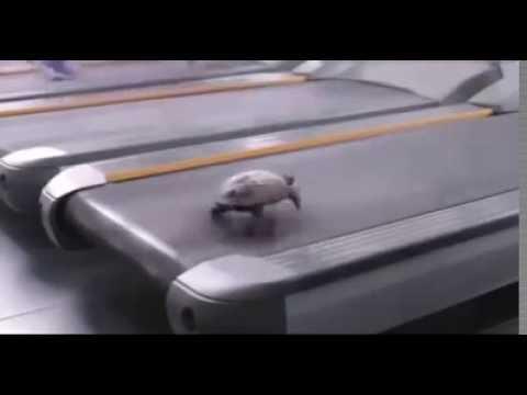 Turtle  It can run FAST