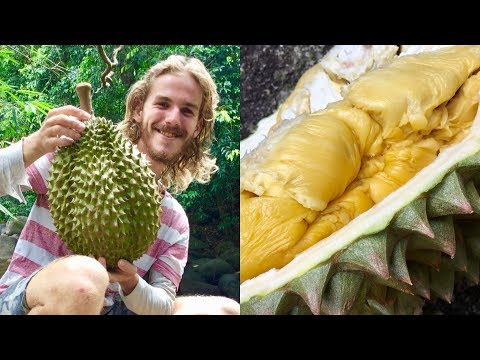 Have You Ever Seen A Durian This Big?