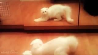 Животные и зеркало. Приколы