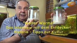 Interview mit dem Entdecker der Walter Worms