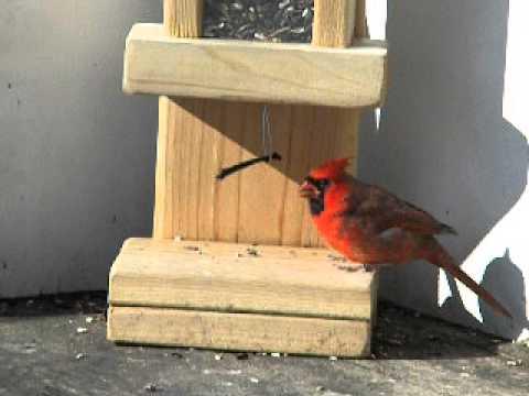 CARDINAL, SMART BIRD FEEDER, NOV 8 14 001