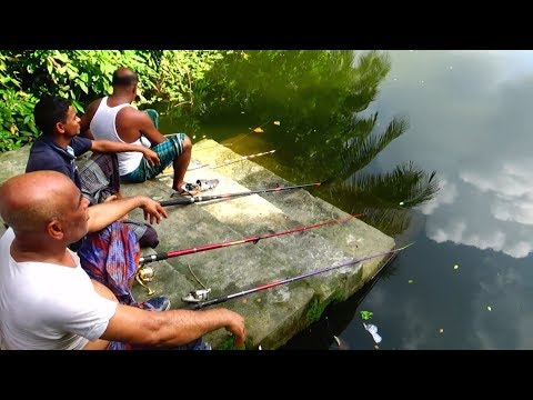 Best Fishing Video | Fishing With Reel (Part-89)