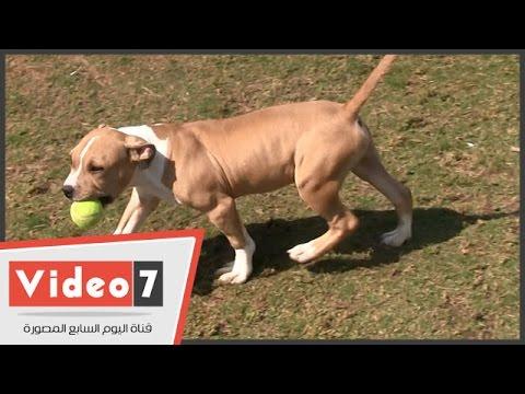 بالفيديو الطريقة الصحيحة لتدريب الكلاب الصغيرة Youtube