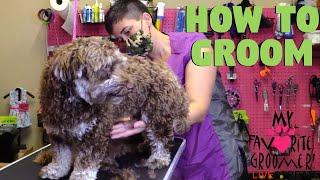 Dog Grooming At A Dog Salon