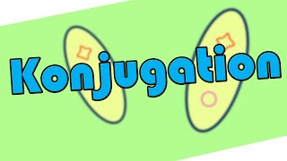 Konjugation – Biologie │EinfachBio