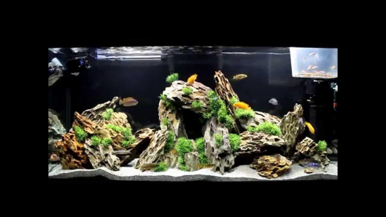 South African Cichlid Tank Dragon Stone Ohko Stone Youtube