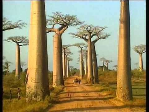 MADAGASCAR  5  DE 6. NATURALEZA.  VIDEOS DE VIAJES AÑOS LUZ.   DOCUMENTAL. Videos De Viajes