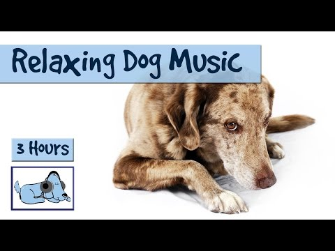 3 WHOLE HOURS of Dog Music!