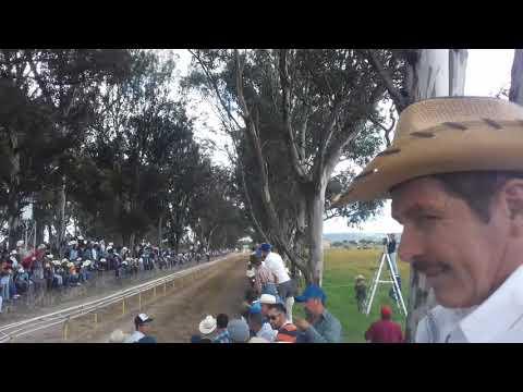 Carreras de caballos (san miguel el alto jalisco)