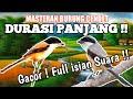 Masteran Cendet Pentet Full Isian  Mp3 - Mp4 Download