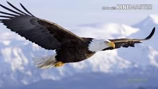 Орёл в деле! Нападение орла