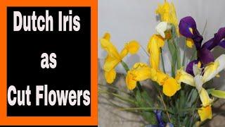Dutch Iris Harvest & Vase Life Tips ~ VLOG 52