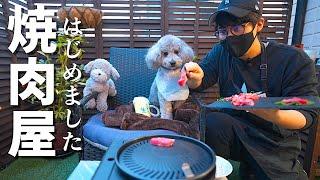 🐶【コント】犬と自宅で焼肉屋さんごっこしたら楽し過ぎたw【トイプードル】