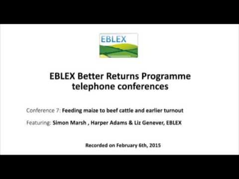 Feeding maize to beef cattle and earlier turnout: EBLEX telephone conference