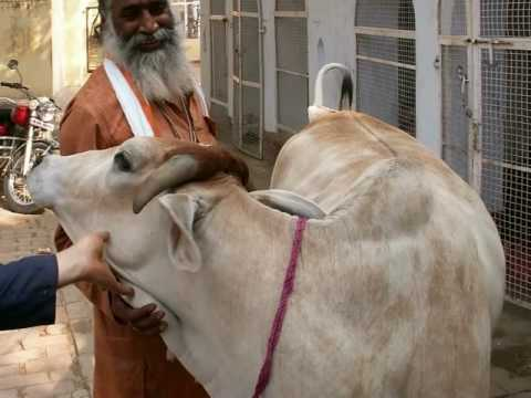 Life of Vrindavan