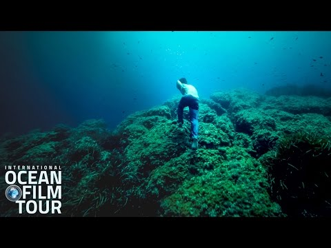 THIS IS FOR YOU OCEAN LOVERS | International OCEAN FILM TOUR