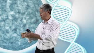 Gambar cover 16 - Doenças Autoimunes